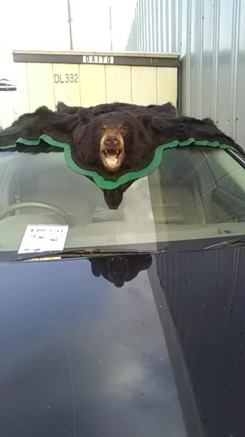 車の上の熊.jpg