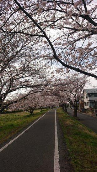 2021桜2 (2).JPG